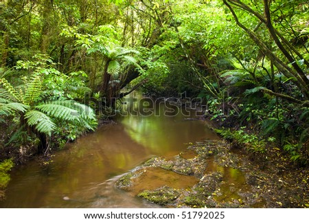 Stream in a heart of  rain forest, New Zealand - stock photo