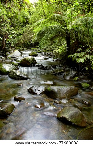 Stream in New Zealand forest - stock photo