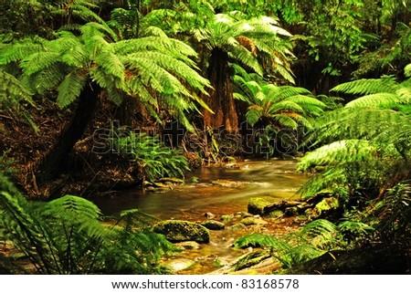 Stream in Otway National Park, Australia - stock photo
