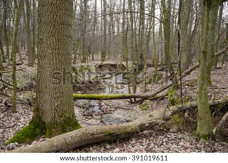 Stream in the deciduous forest with broken moss overgrown trees - stock photo