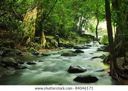 Stream in the forest. - stock photo