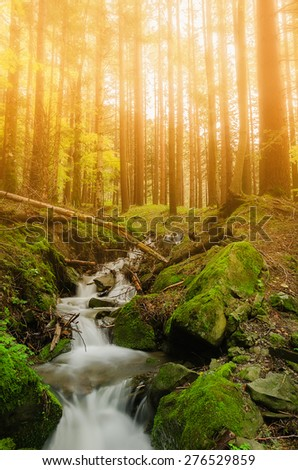 stream in the forest at sunset - stock photo