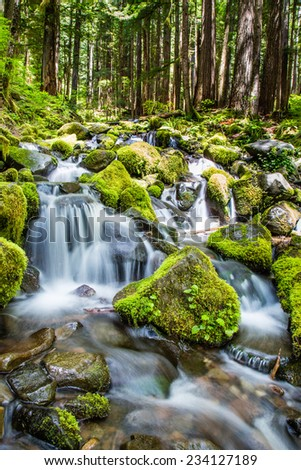 Stream in the moss - stock photo