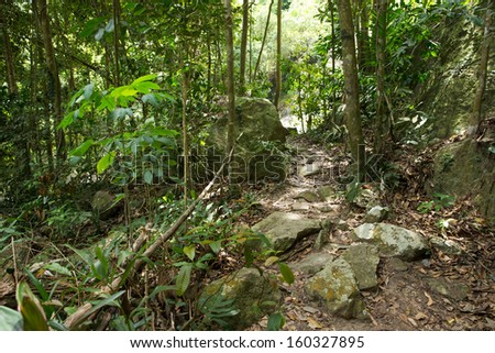 Stream in the tropical jungle