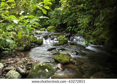 Stream in tropical forest - stock photo