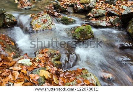 Stream the autumn in forest