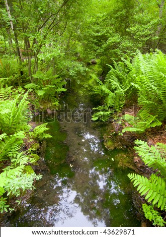 stream through green trees and plants