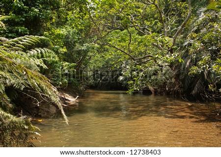 Stream trekking in the jungle - stock photo