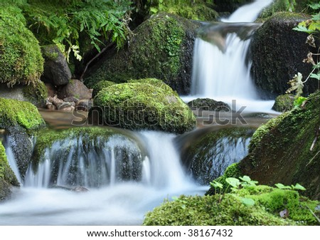 Stream waterfall in the forest
