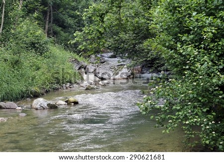 stream with fresh water in the middle of the Woods in spring in the mountains of Italy
