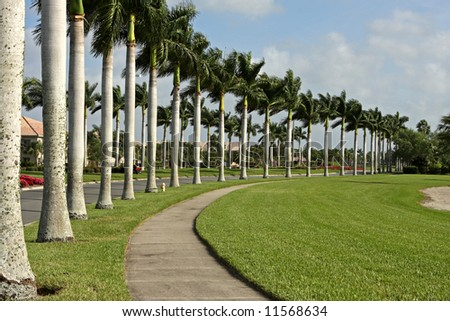 street and sidewalk lined with palm trees - stock photo