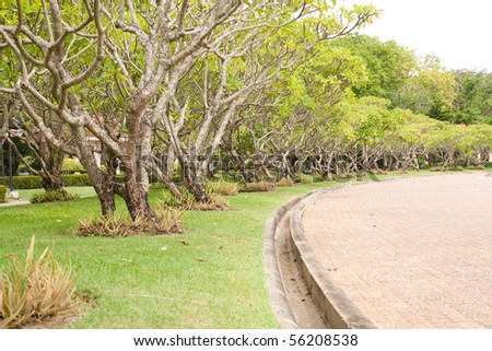 street and the green grass,in the park on the outdoor - stock photo