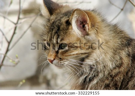 Street cat - stock photo