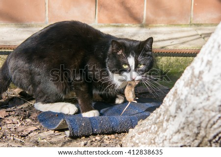 Street cat caught the mouse in the yard - stock photo