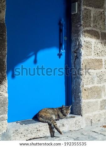 Street cat near a blue metal door in old Jaffa, Israel - stock photo