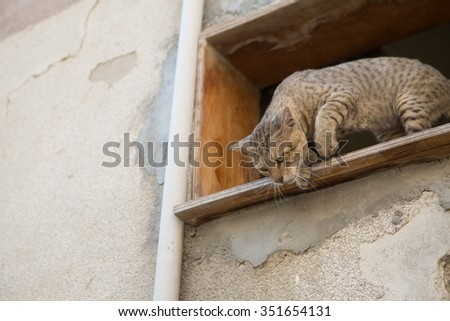 street cat stalking prey from higher ground - stock photo