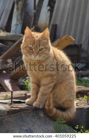 Street cat. Stray cat.  - stock photo