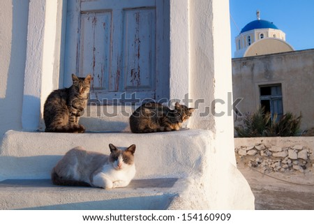 Street cats in Athens, Greece - stock photo