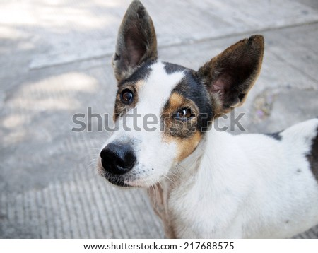 street dog - stock photo