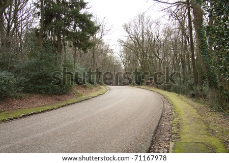 Street in the forest