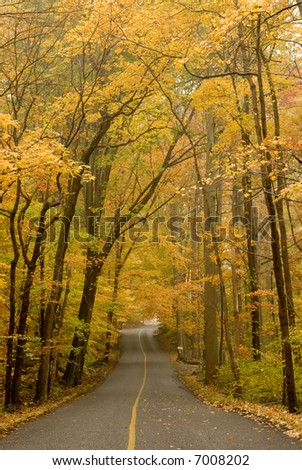 Street in the woods - stock photo