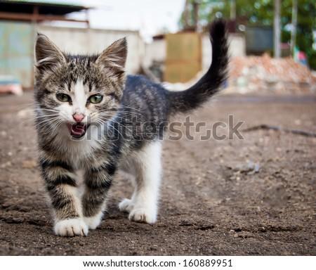 street kitten - stock photo