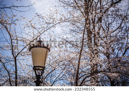 Street lamp and branches - stock photo