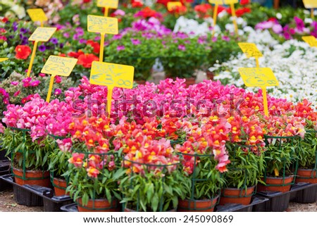 Street show-window of flower shop in Italy,Europa - stock photo