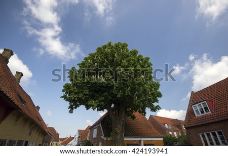 Street view from Ribe with a blooming chestnut tree - Denmark. - stock photo