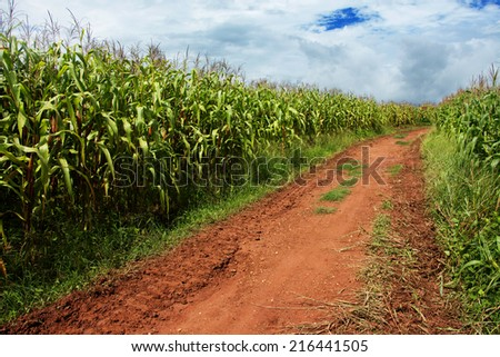 Streets in farm with traces of wheel running through  - stock photo