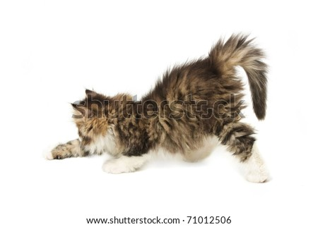 Stretching tabby fluffy  kitten isolated on white background - stock photo
