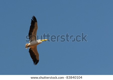 stretching the wings - stock photo