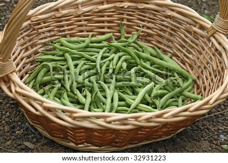 string beans in a wicker basket outdoor - stock photo