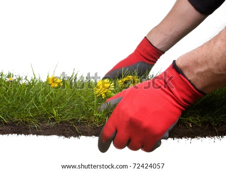 strip of grass and soil with garden-gloves isolated on white background. Please Have a look at my similar images - stock photo