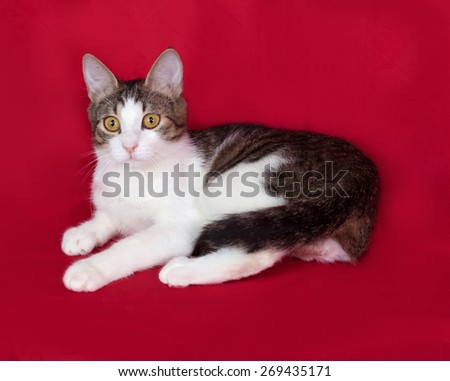 Striped and white cat teenager sitting on red background