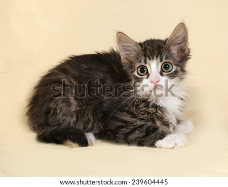 Striped and white fluffy kitten lying on yellow background
