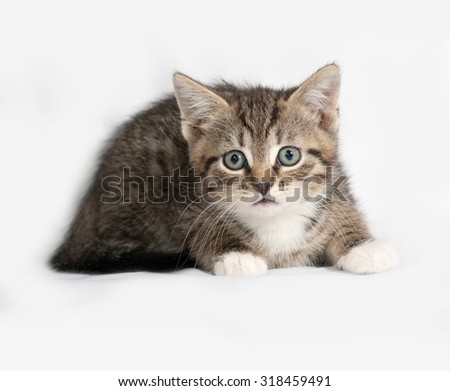 Striped and white kitten lies on gray background