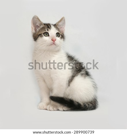 Striped and white kitten sitting on gray background