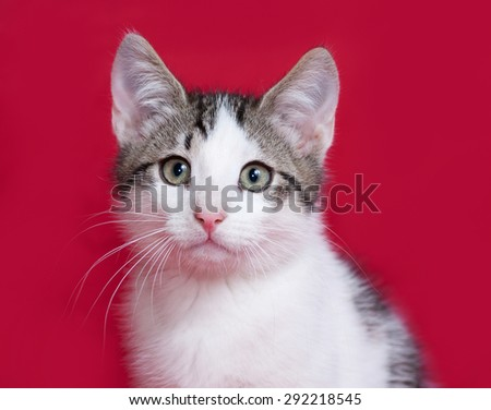 Striped and white kitten sitting on red background - stock photo