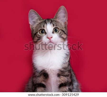Striped and white kitten sitting on red background