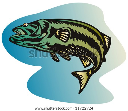 Striped bass leaping - stock photo