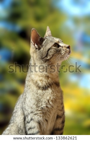 striped beautiful cat outside with a curious look an her face - stock photo
