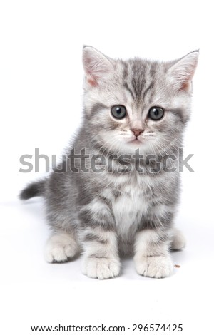 Striped British kitten sitting and looking at the camera (isolated on white) - stock photo
