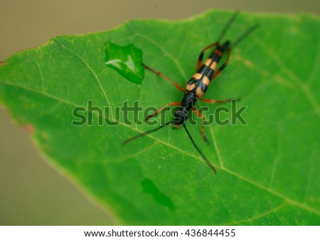 striped bug on green leaf - stock photo