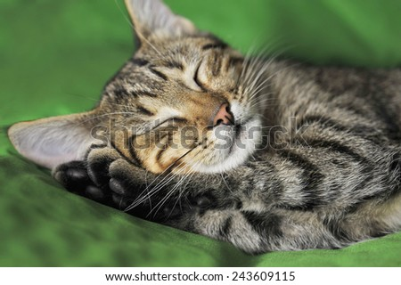 Striped cat lies on a bed. - stock photo