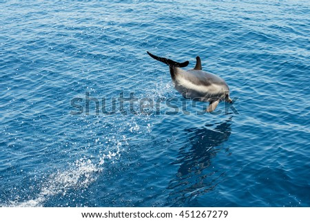 striped dolphin jumping outside the sea