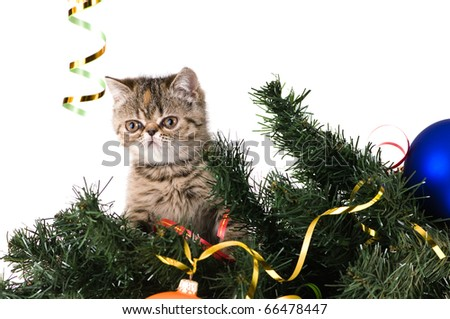 Striped fluffy kitten on a branch christmas tree - stock photo