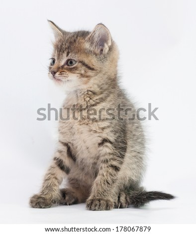 Striped fluffy kitten sitting looking away on gray-white background