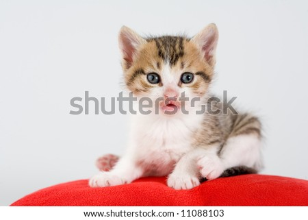 striped kitten and a red pillow, isolated
