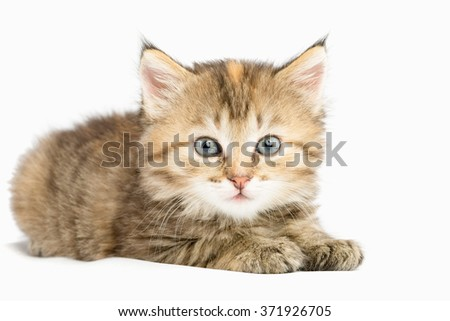 Striped kitten carefully watching wide-eyed. Lying paws forward